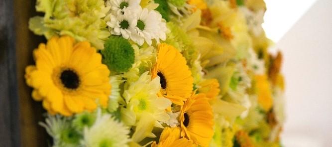 Csíkos, fekete-fehér, gyönyörű sárga